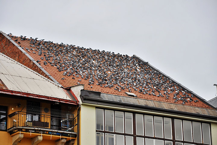 A2B Pest Control are able to install spikes to deter birds from roofs in Palmers Green.