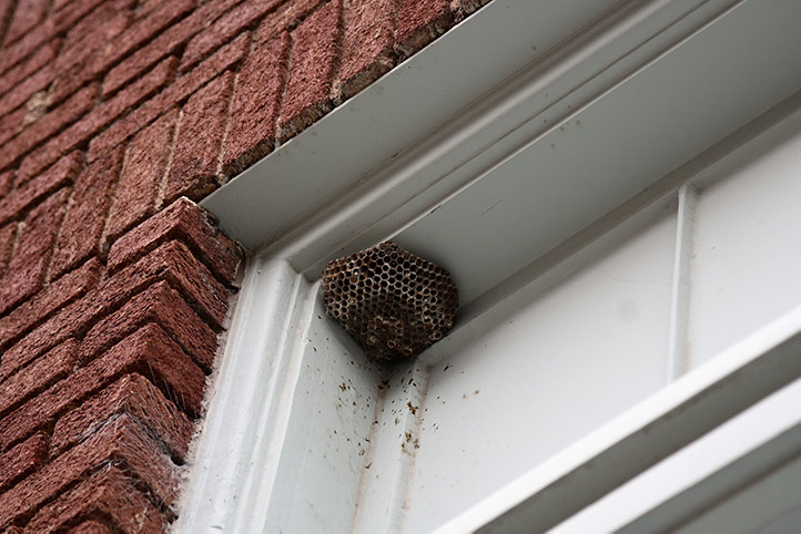 We provide a wasp nest removal service for domestic and commercial properties in Palmers Green.
